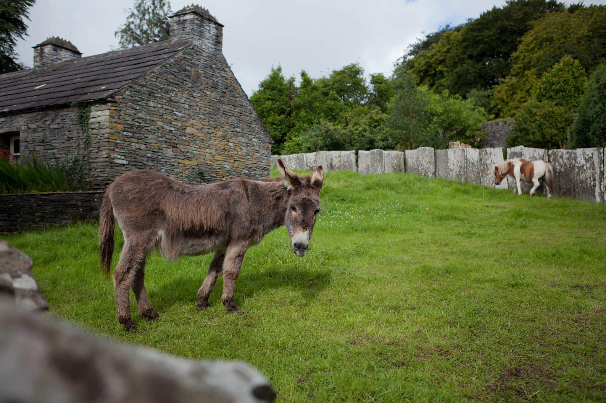 Bunratty - donkey